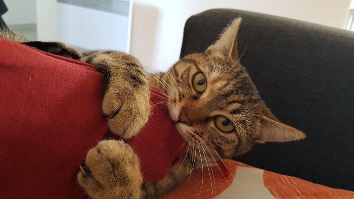My cat attacking the Python C API